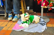 Canine Fashion: Medellin