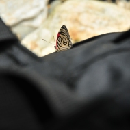 A beautiful butterfly