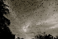 The Birds are Coming Home to Roost: Leticia