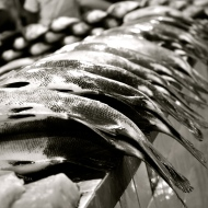 Fish at a market in Manaus