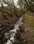 Stream clearing on a fine day in Trent Park